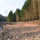 Log Cabin site before construction.
